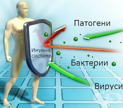 20150213220812podsilvane_na_imunnata_sistema_imunomodulatori1