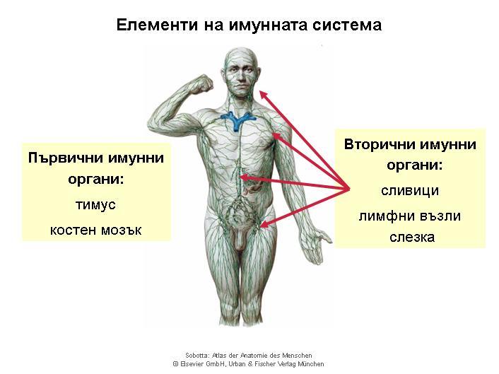 Immune system_bg_1