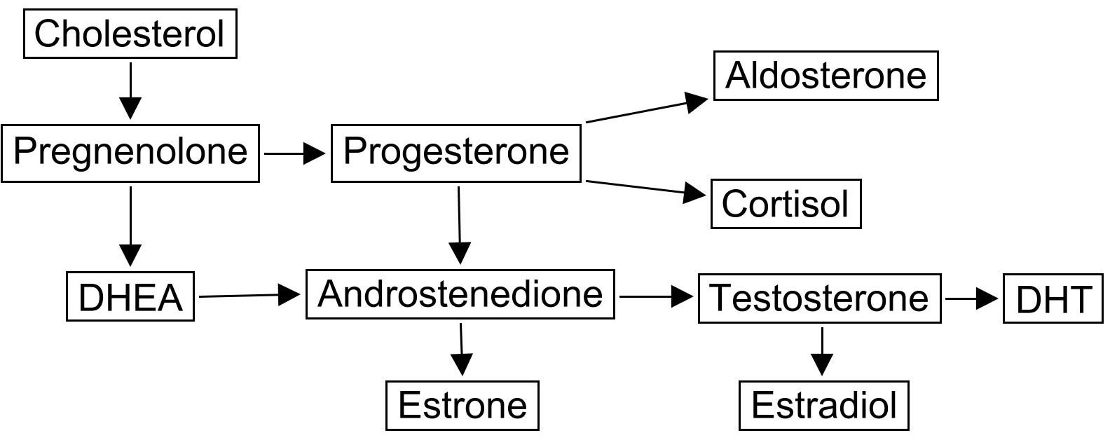 steroid pathway