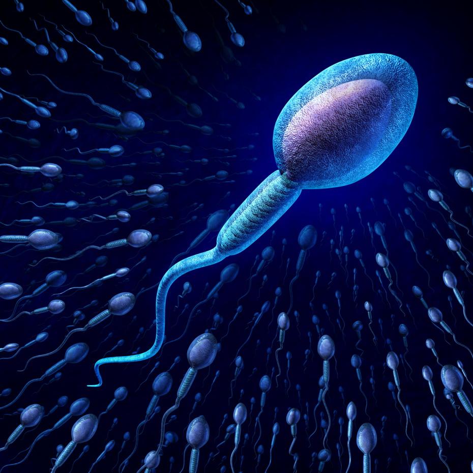 donorstvo-spermi-v-spb02